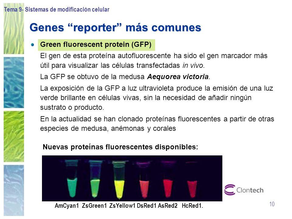 Tema 9- Sistemas de modificación celular 10 Green fluorescent protein (GFP) El gen de esta proteína autofluorescente ha sido el gen marcador más útil