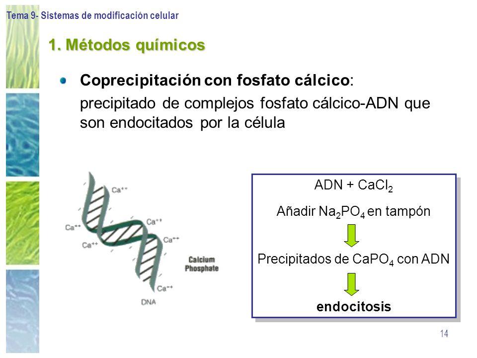 Tema 9- Sistemas de modificación celular 14 1. Métodos químicos Coprecipitación con fosfato cálcico: precipitado de complejos fosfato cálcico-ADN que