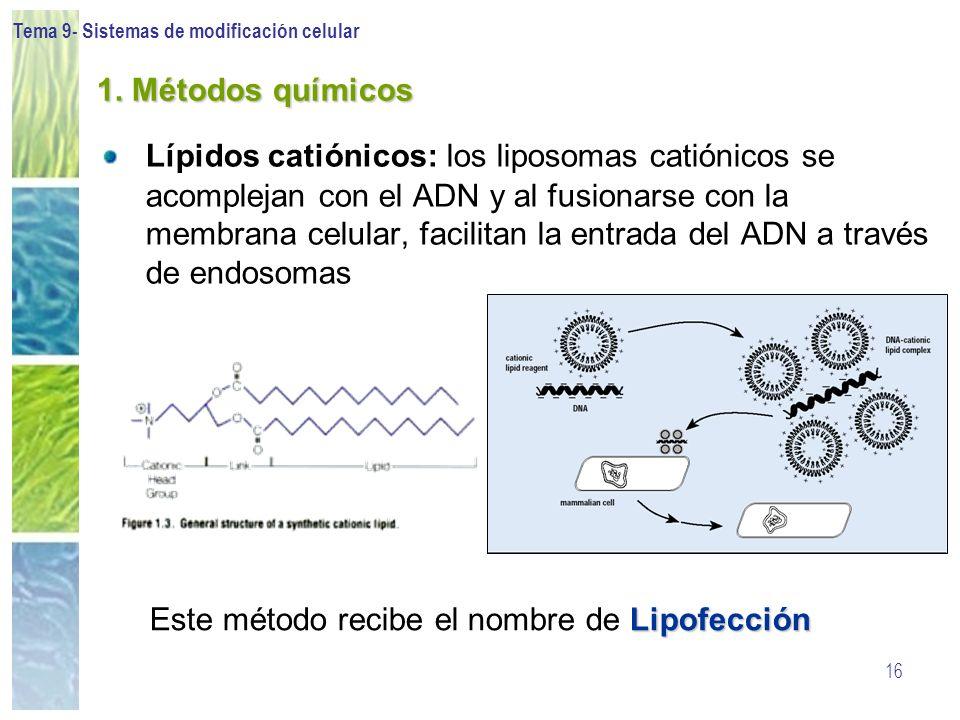 Tema 9- Sistemas de modificación celular 16 1. Métodos químicos Lípidos catiónicos: los liposomas catiónicos se acomplejan con el ADN y al fusionarse