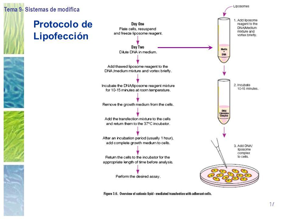 Tema 9- Sistemas de modificación celular 17 Protocolo de Lipofección