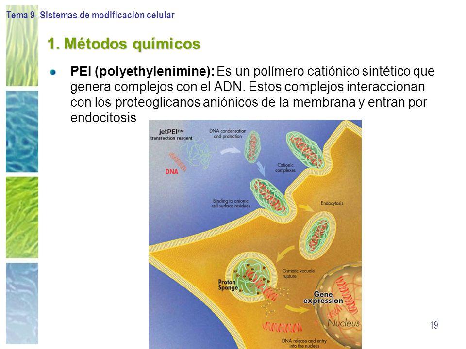 Tema 9- Sistemas de modificación celular 19 1. Métodos químicos PEI (polyethylenimine): Es un polímero catiónico sintético que genera complejos con el