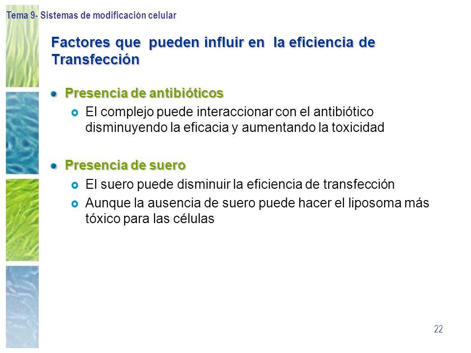 Tema 9- Sistemas de modificación celular 22 Factores que pueden influir en la eficiencia de Transfección Presencia de antibióticos El complejo puede i