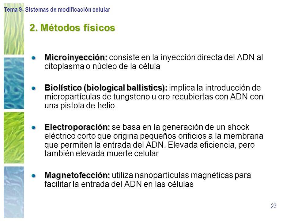 Tema 9- Sistemas de modificación celular 23 2. Métodos físicos Microinyección: Microinyección: consiste en la inyección directa del ADN al citoplasma