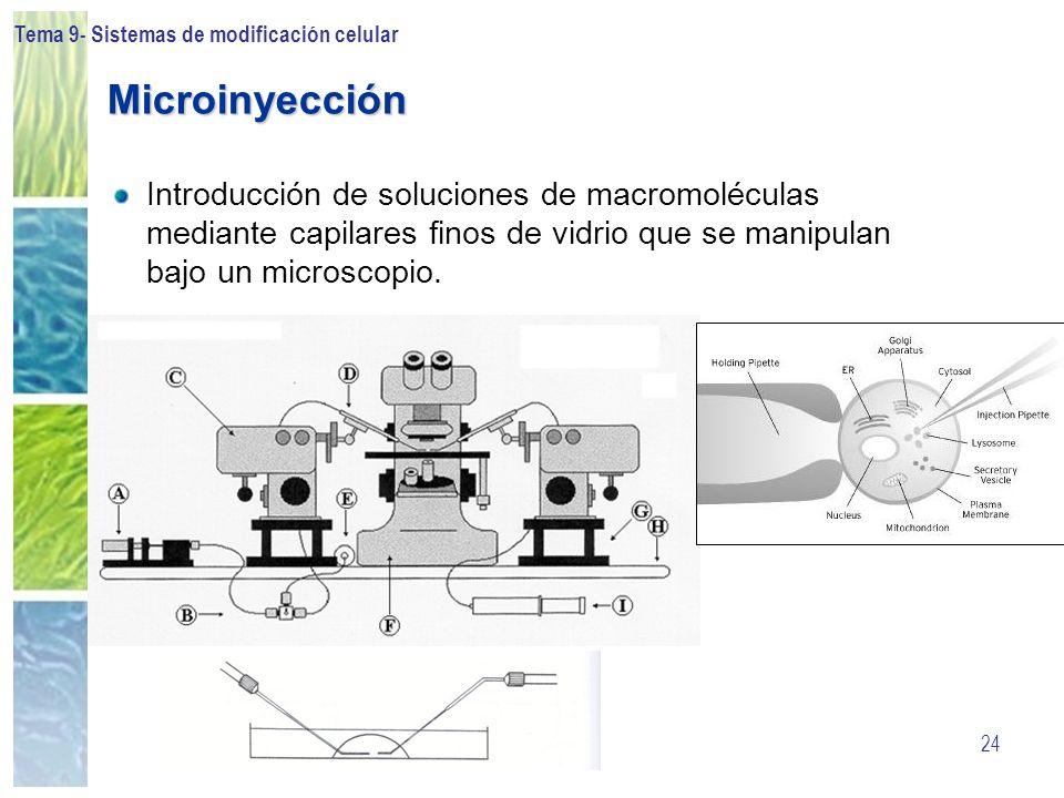 Tema 9- Sistemas de modificación celular 24 Microinyección Introducción de soluciones de macromoléculas mediante capilares finos de vidrio que se mani