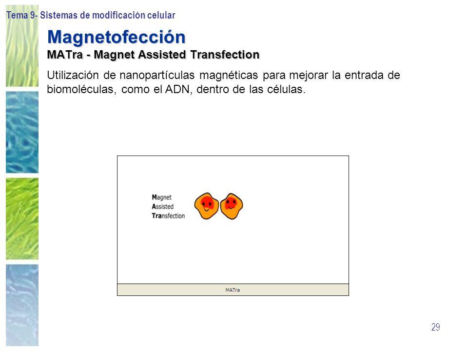 Tema 9- Sistemas de modificación celular 29 Magnetofección MATra - Magnet Assisted Transfection Utilización de nanopartículas magnéticas para mejorar