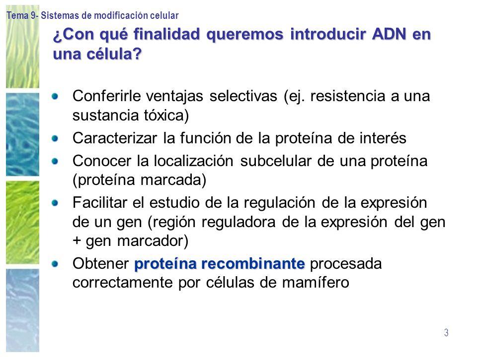 Tema 9- Sistemas de modificación celular 4 Condiciones ideales de introducción del ADN El método y las condiciones óptimos para cada tipo celular se tienen que establecer empíricamente Eficiencia máxima Toxicidad nula
