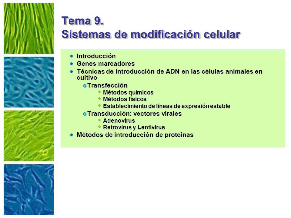 Tema 9. Sistemas de modificación celular Introducción Genes marcadores Técnicas de introducción de ADN en las células animales en cultivo Transfección