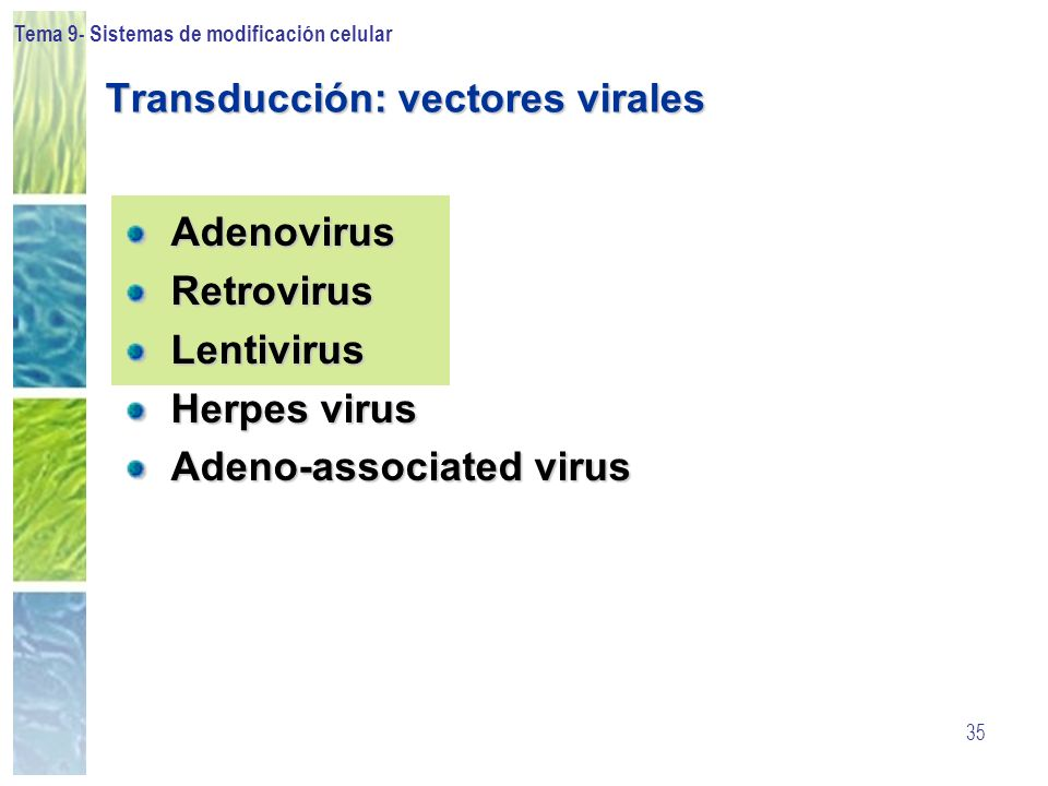 Tema 9- Sistemas de modificación celular 35 Transducción: vectores virales AdenovirusRetrovirusLentivirus Herpes virus Adeno-associated virus