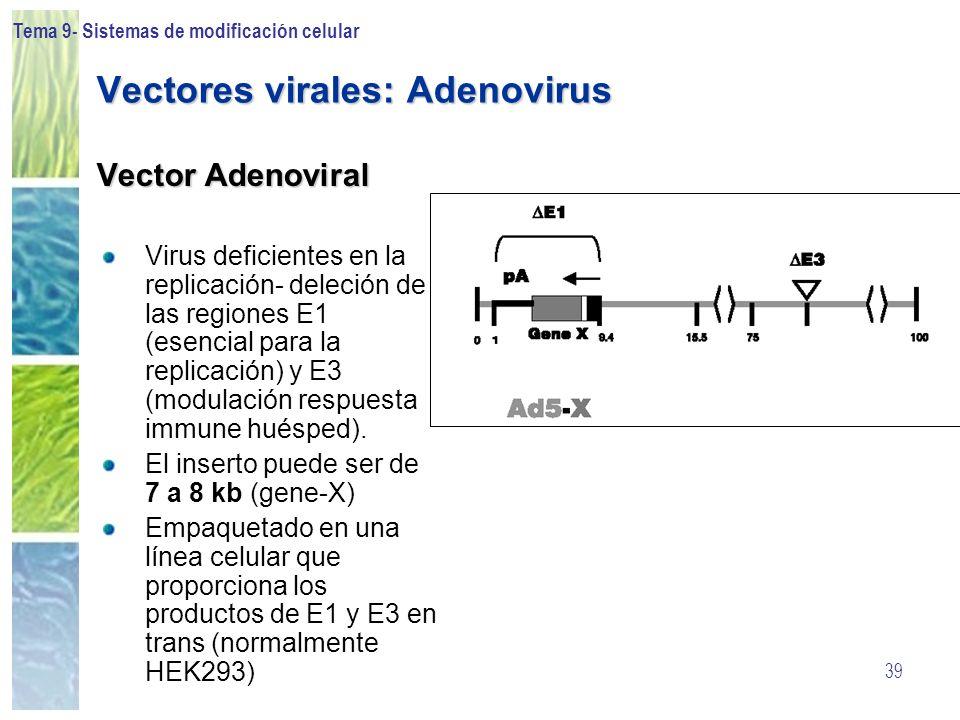 Tema 9- Sistemas de modificación celular 39 Vectores virales: Adenovirus Vector Adenoviral Virus deficientes en la replicación- deleción de las region