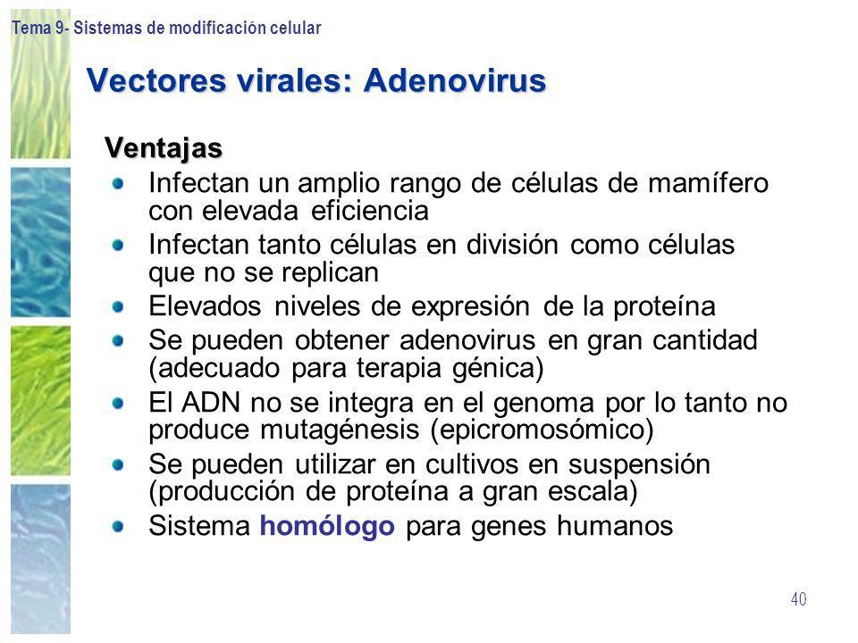 Tema 9- Sistemas de modificación celular 40 Vectores virales: Adenovirus Ventajas Infectan un amplio rango de células de mamífero con elevada eficienc