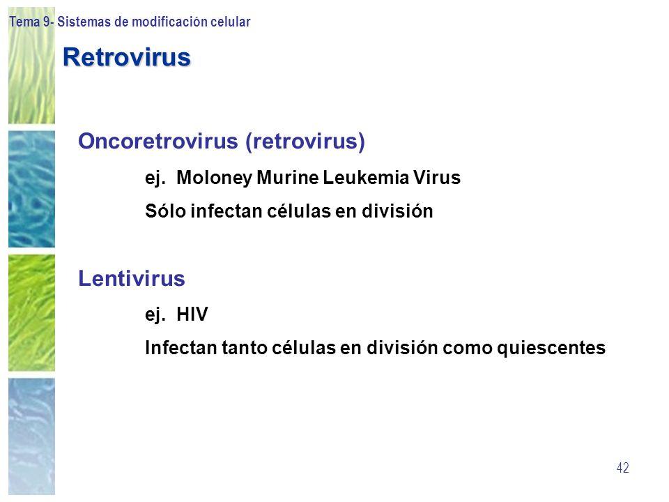 Tema 9- Sistemas de modificación celular 42 Oncoretrovirus (retrovirus) ej. Moloney Murine Leukemia Virus Sólo infectan células en división Lentivirus