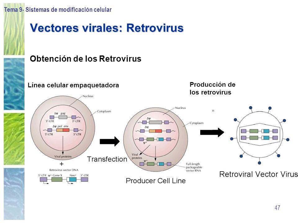 Tema 9- Sistemas de modificación celular 47 Vectores virales: Retrovirus Obtención de los Retrovirus Línea celular empaquetadora Producción de los ret