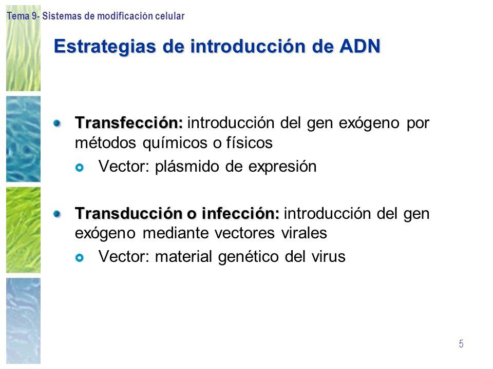 Tema 9- Sistemas de modificación celular 46 Vectores virales: Retrovirus Promotor Gag- proteínas estructurales internas de la cápside Pol- Rtase, integrasa, proteasa Env- proteínas de la cápside Genoma retroviral Vector retroviral Promotor Tamaño máximo del inserto 8kb Construcción Vector Retroviral