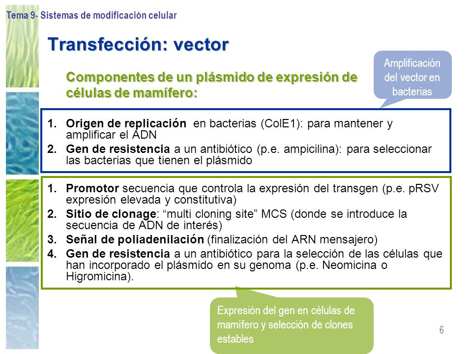Tema 9- Sistemas de modificación celular 6 Transfección: vector Componentes de un plásmido de expresión de células de mamífero: 1.Origen de replicació