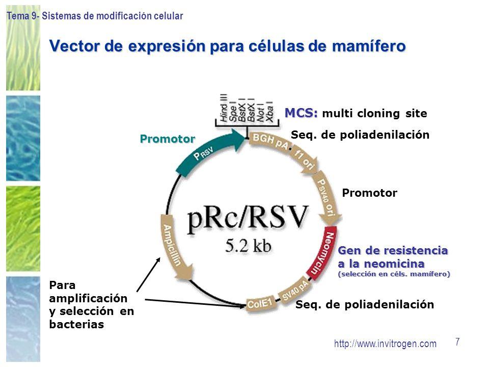 Tema 9- Sistemas de modificación celular 48 Vectores virales: Retrovirus Ventajas: Expresión estable de la proteína (integración del ADN al genoma) Puede infectar células de distintas especies (insectos, amfibios, peces, aves, mamíferos)Inconvenientes: Limitación tamaño inserto ( 8 kb) Dificultad de producción a gran escala de los retrovirus No infecta células que no se repliquen La inserción del ADN al genoma puede producir mutagénesis insercionalAplicaciones: Introducción de ADN en células en cultivo para obtener expresión estable Terapia génica ex vivo