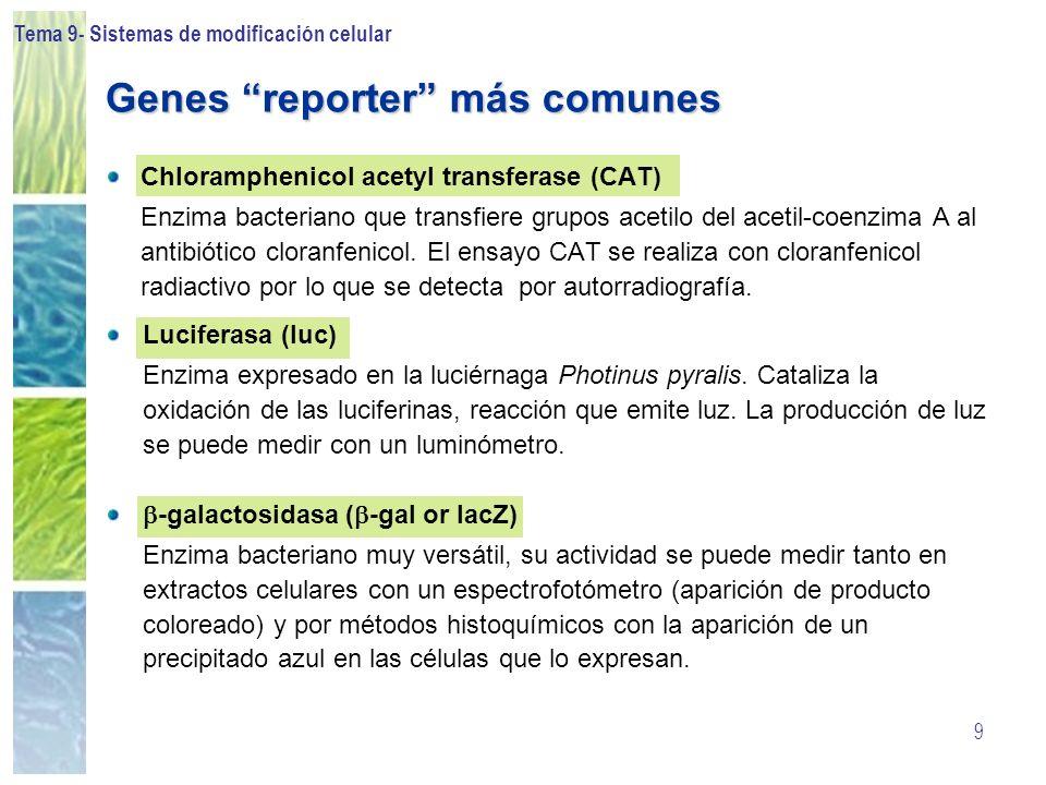 Tema 9- Sistemas de modificación celular 9 Genes reporter más comunes Chloramphenicol acetyl transferase (CAT) Enzima bacteriano que transfiere grupos