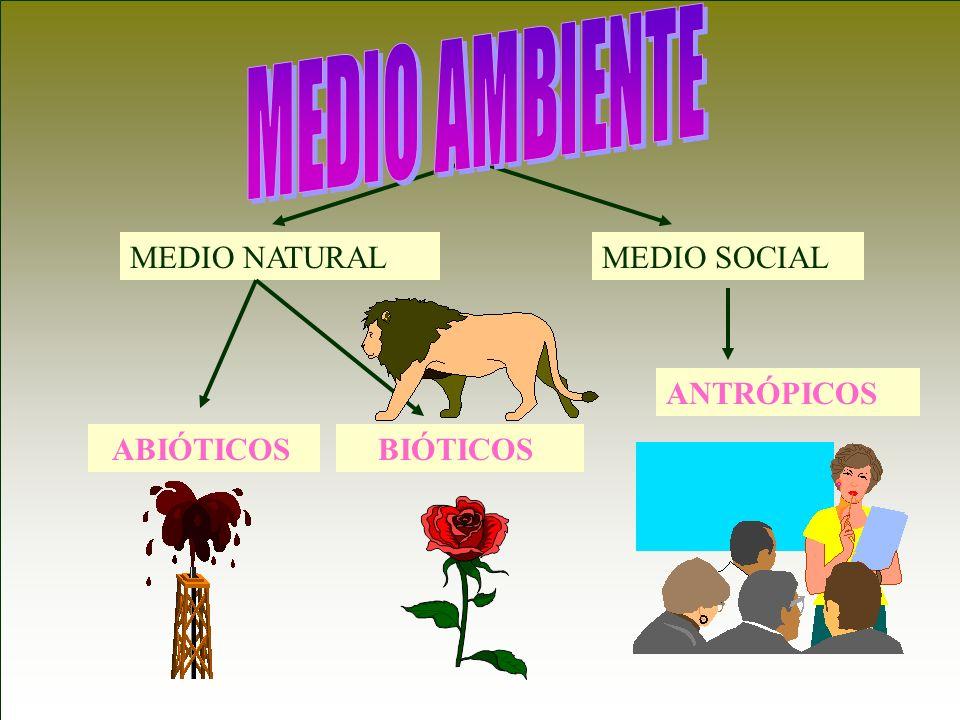 MEDIO NATURALMEDIO SOCIAL ABIÓTICOS BIÓTICOS ANTRÓPICOS