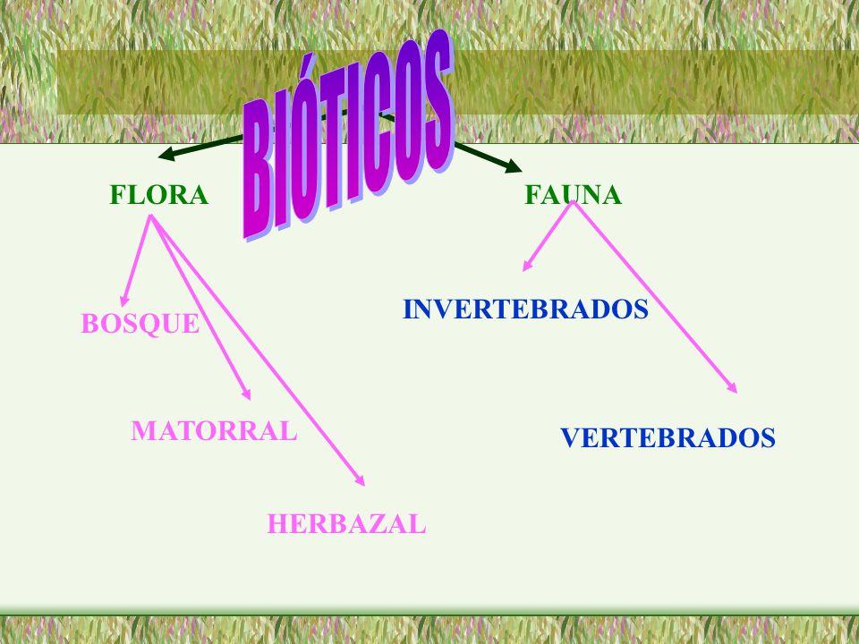 FLORAFAUNA BOSQUE MATORRAL HERBAZAL INVERTEBRADOS VERTEBRADOS