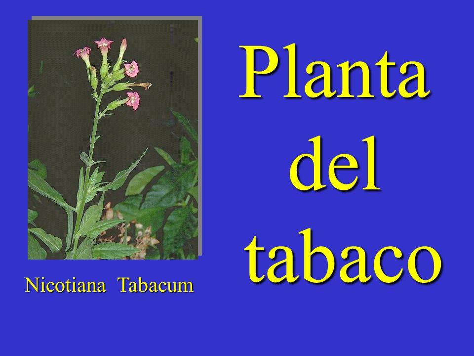 Tabacalera ha ganado 37% mas en 1999