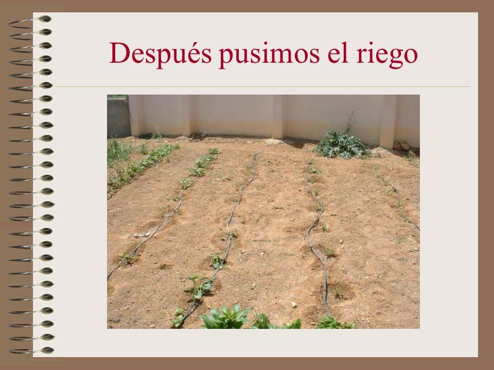 Así es como nos quedó el huerto una vez plantado las lechugas, ajos, cebollas, habas, tomates, calabazas,pimientos,etc. Este es el huerto de el Herrum