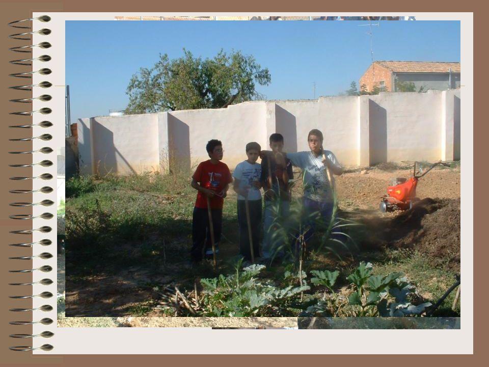 Lo primero que tuvimos que hacer fue quitar las malas hierbas. Y nuestros alumnos se pusieron manos a la obra con las azadas.