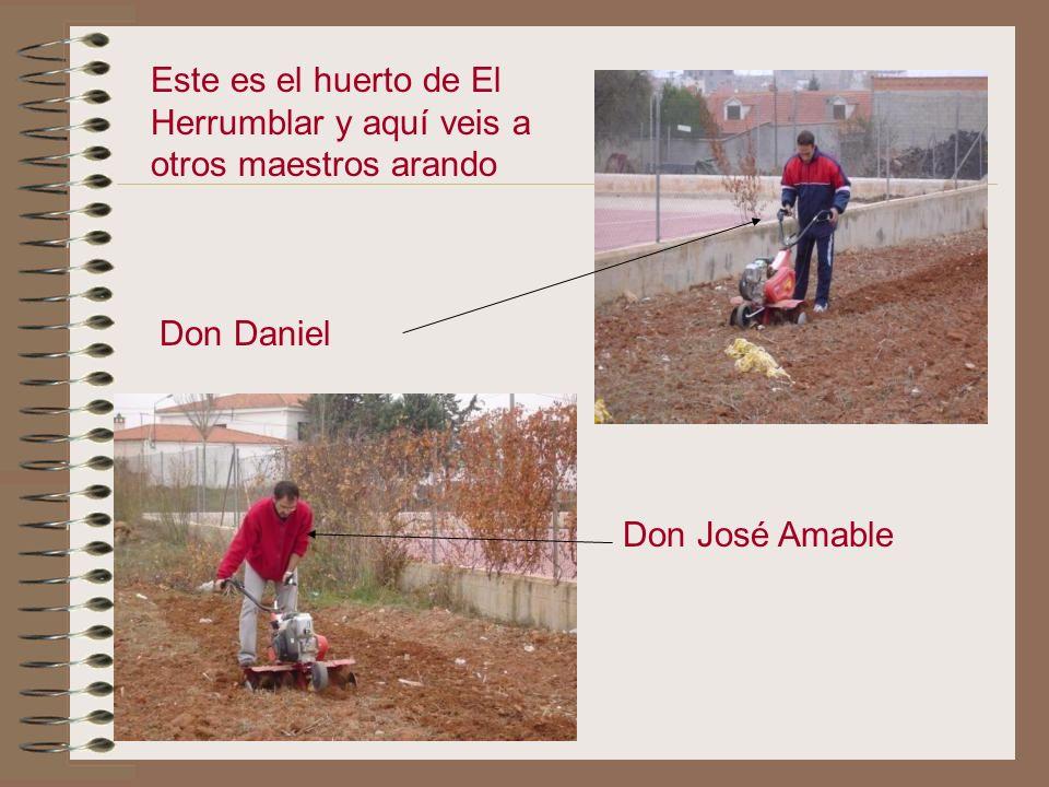 Después de quitar las malas hierbas nos pusimos a labrar el huerto con la mula mecánica que nos prestó Don José Amable. Labramos muchos maestros con l