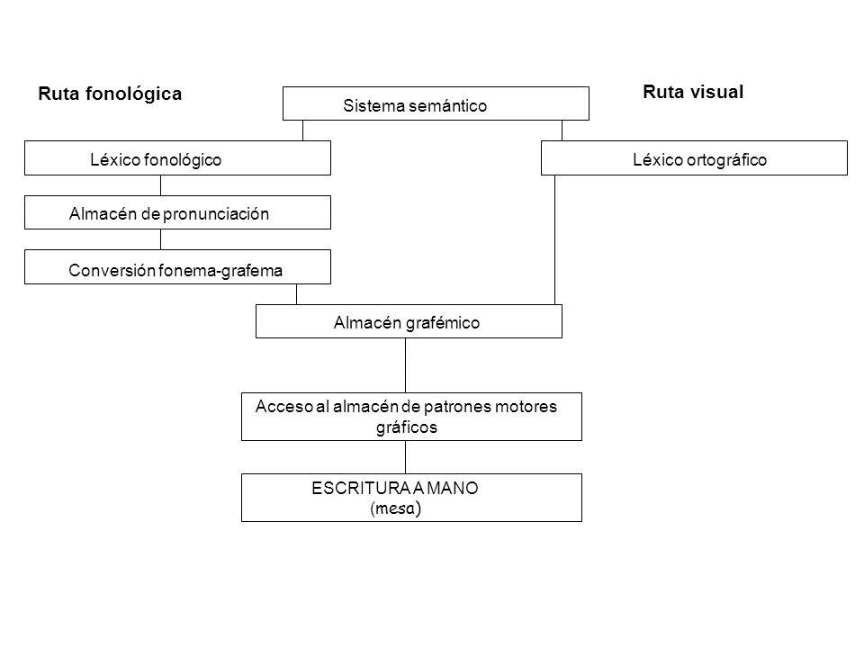 Léxico fonológico Almacén de pronunciación Conversión fonema-grafema Léxico ortográfico Ruta fonológica Sistema semántico Ruta visual Almacén grafémic