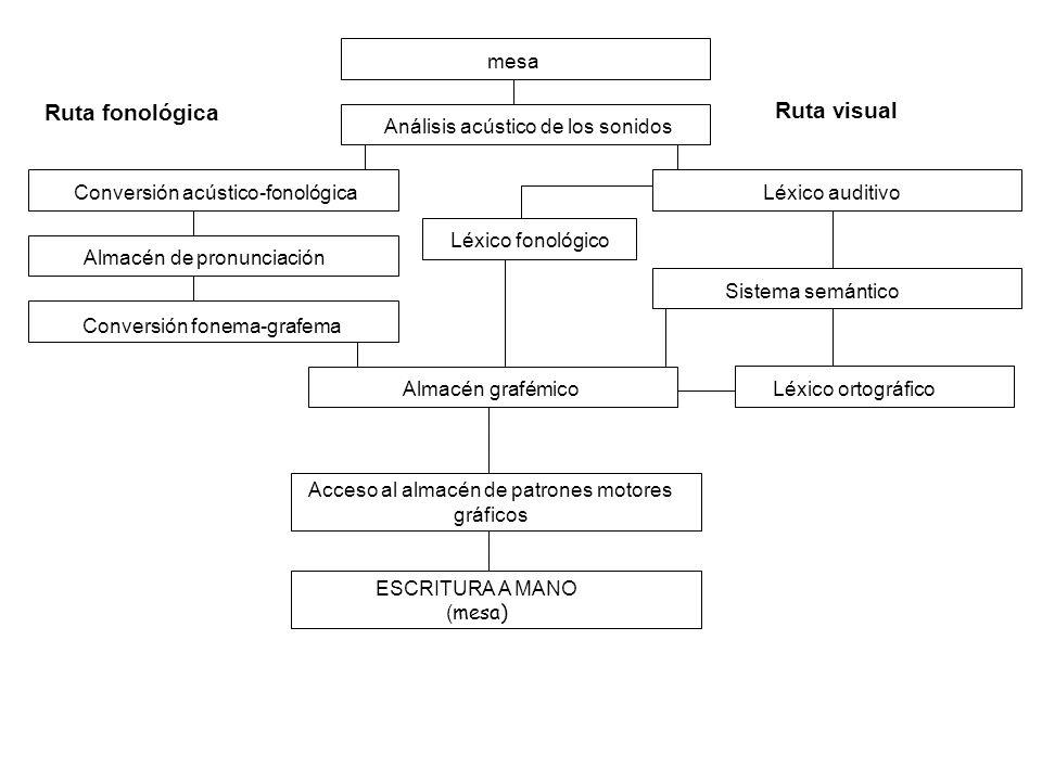 mesa Análisis acústico de los sonidos Conversión acústico-fonológica Almacén de pronunciación Conversión fonema-grafema Ruta fonológica Almacén grafém