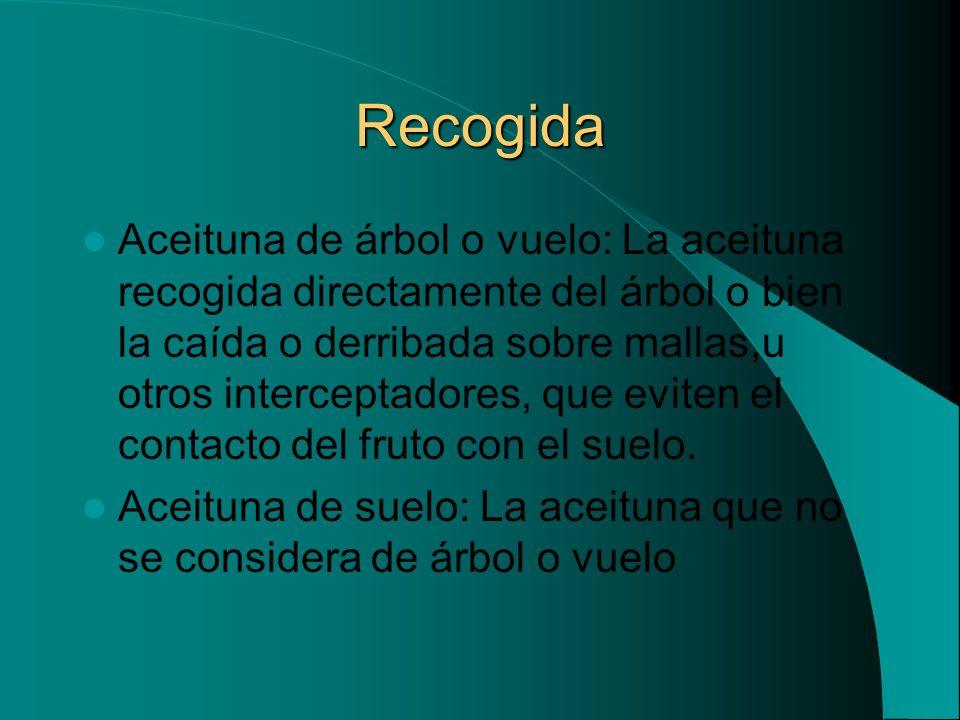 Recogida Aceituna de árbol o vuelo: La aceituna recogida directamente del árbol o bien la caída o derribada sobre mallas,u otros interceptadores, que