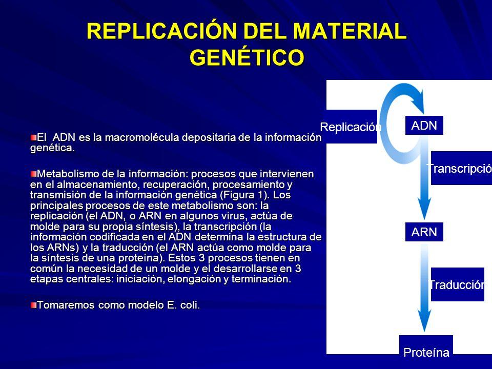 REPLICACIÓN DEL MATERIAL GENÉTICO El ADN es la macromolécula depositaria de la información genética. Metabolismo de la información: procesos que inter