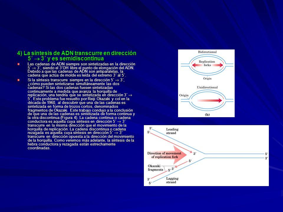 4) La síntesis de ADN transcurre en dirección 5´ 3´ y es semidiscontinua Las cadenas de ADN siempre son sintetizadas en la dirección 5´ 3´, siendo el