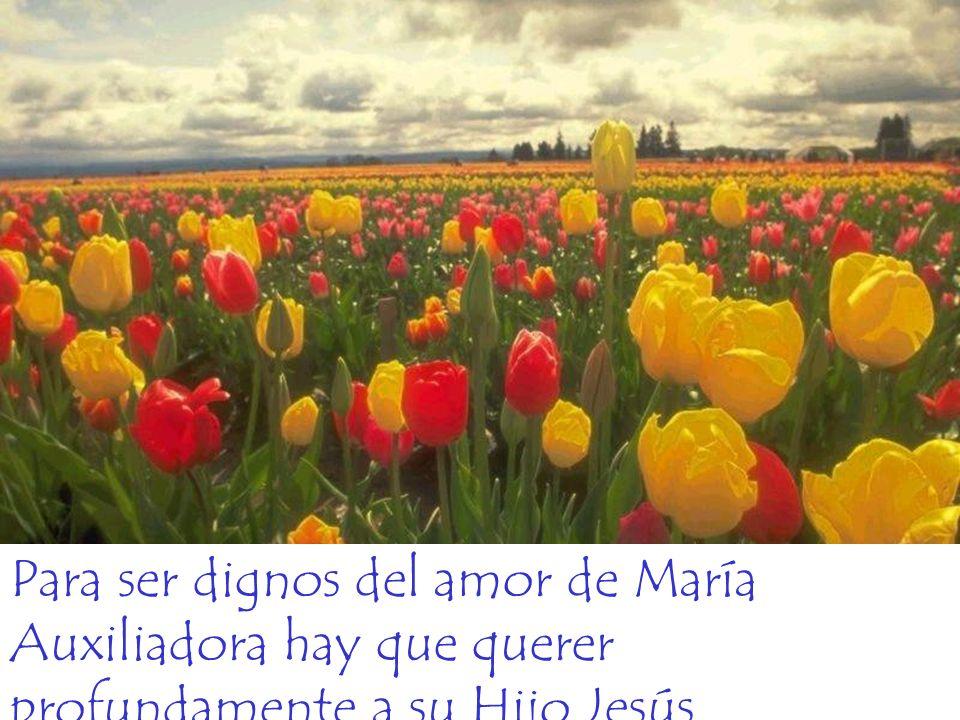 Para ser dignos del amor de María Auxiliadora hay que querer profundamente a su Hijo Jesús