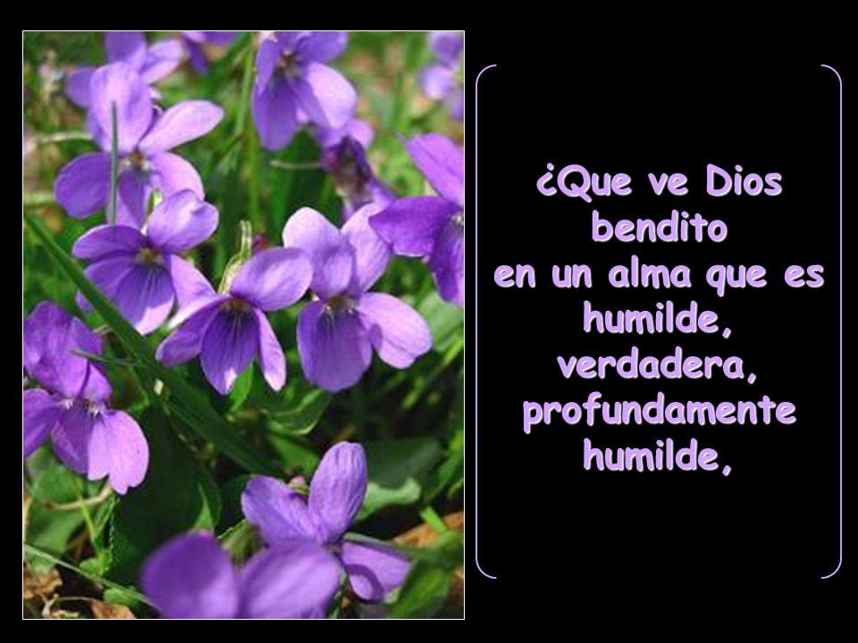 ¿Que ve Dios bendito en un alma que es humilde, verdadera, profundamente humilde,