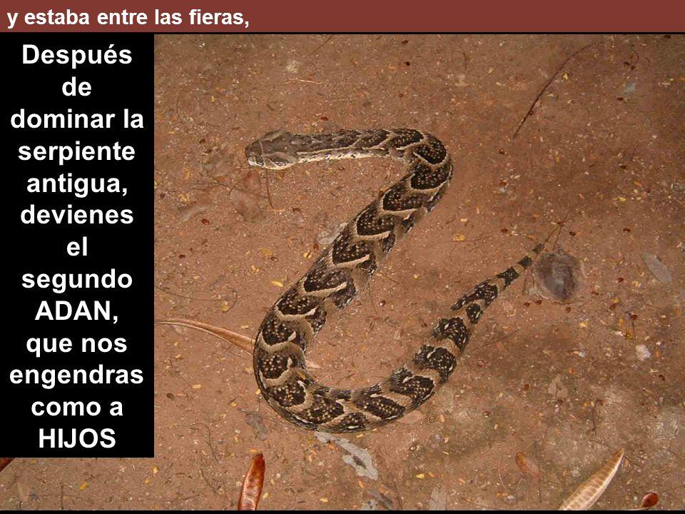 y estaba entre las fieras, Después de dominar la serpiente antigua, devienes el segundo ADAN, que nos engendras como a HIJOS