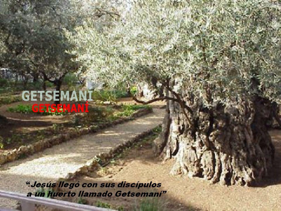 Jesús llegó con sus discípulos a un huerto llamado Getsemaní