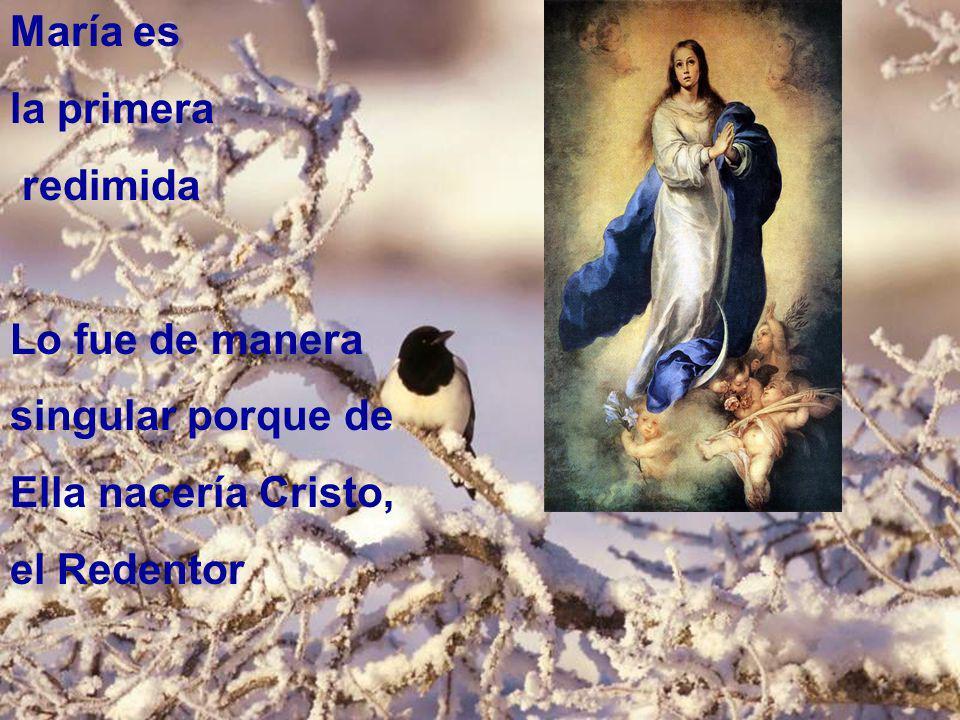 María es la primera redimida Lo fue de manera singular porque de Ella nacería Cristo, el Redentor
