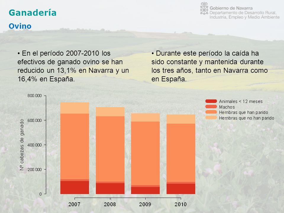 Ganadería Ovino En el período 2007-2010 los efectivos de ganado ovino se han reducido un 13,1% en Navarra y un 16,4% en España. Durante este período l