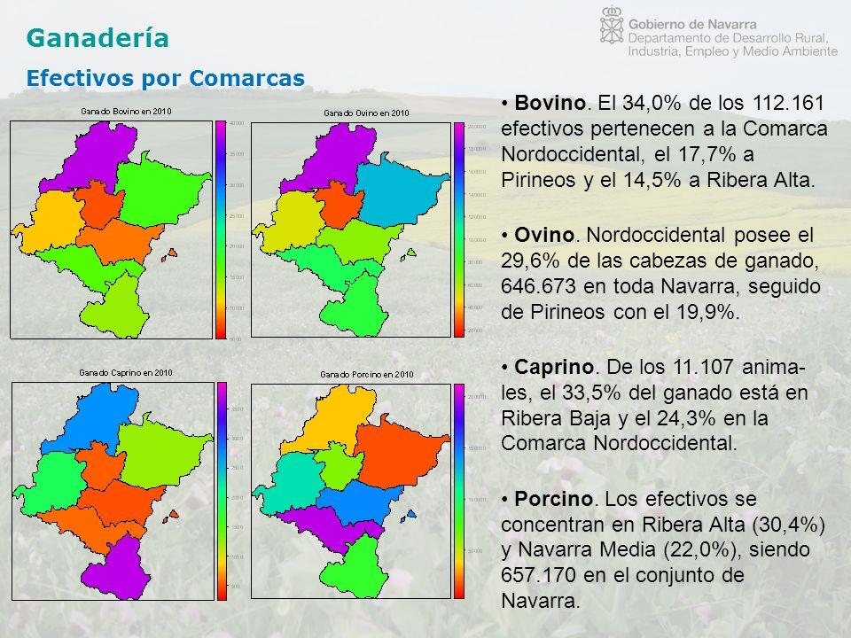 Ganadería Efectivos por Comarcas Bovino. El 34,0% de los 112.161 efectivos pertenecen a la Comarca Nordoccidental, el 17,7% a Pirineos y el 14,5% a Ri