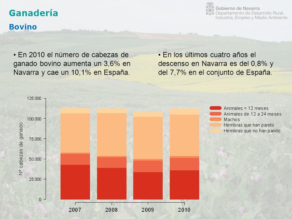 Ganadería Bovino En 2010 el número de cabezas de ganado bovino aumenta un 3,6% en Navarra y cae un 10,1% en España. En los últimos cuatro años el desc