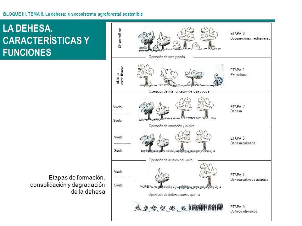 BLOQUE III. TEMA 8. La dehesa: un ecosistema agroforestal sostenible LA DEHESA. CARACTERÍSTICAS Y FUNCIONES Etapas de formación, consolidación y degra