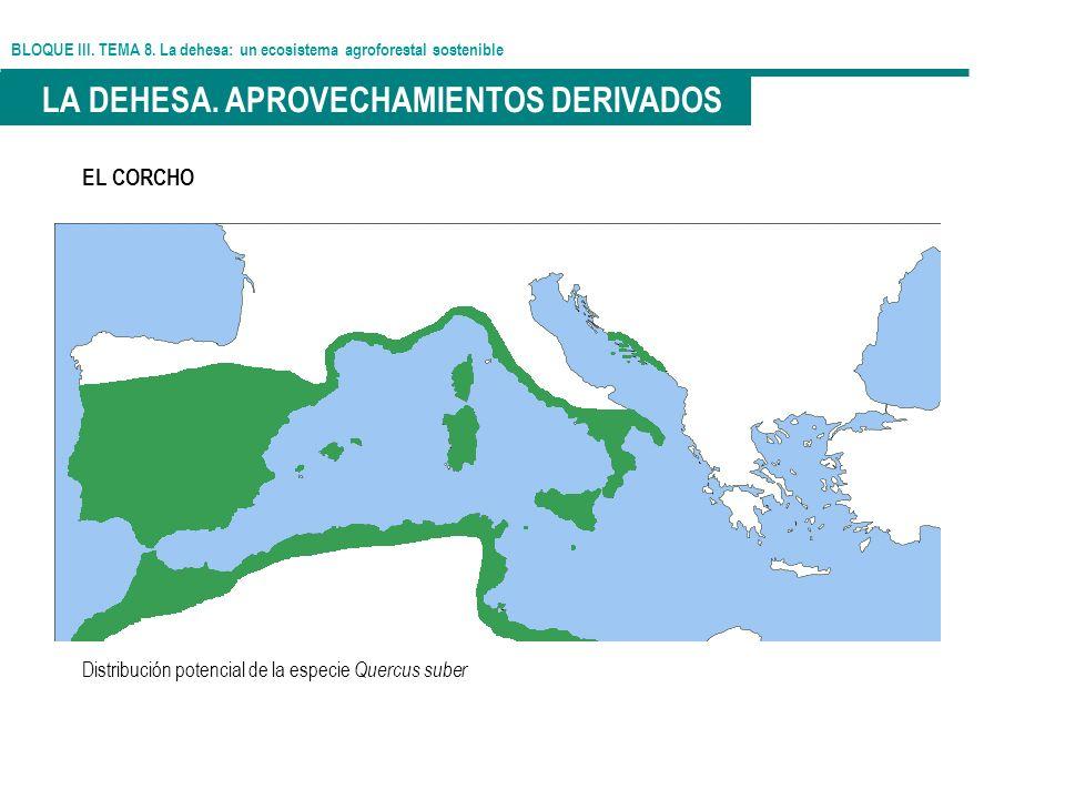 BLOQUE III. TEMA 8. La dehesa: un ecosistema agroforestal sostenible LA DEHESA. APROVECHAMIENTOS DERIVADOS EL CORCHO Distribución potencial de la espe