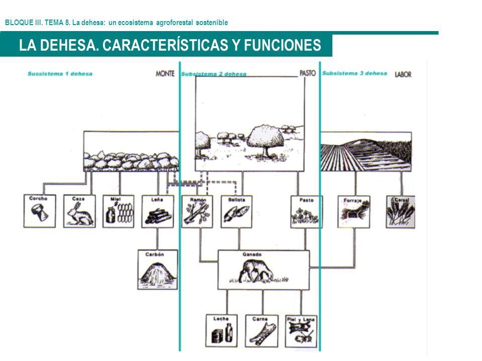 BLOQUE III. TEMA 8. La dehesa: un ecosistema agroforestal sostenible LA DEHESA. CARACTERÍSTICAS Y FUNCIONES