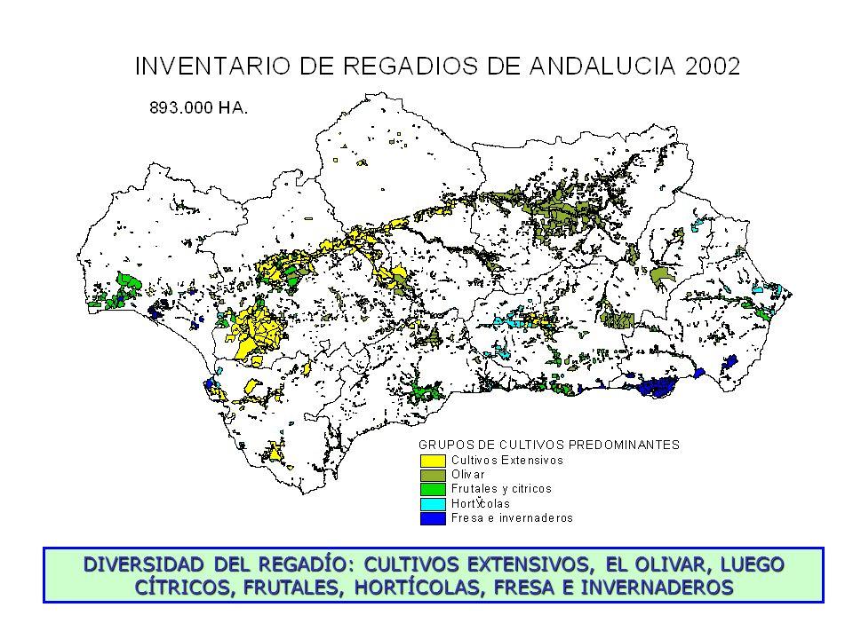 Incremento continuo de la superficie puesta en riego en la cuenca Grandes zonas Olivar 2 Razones: incremento real de la superficie de riego, en la que interviene fundamentalmente el olivar de bajo consumo (1500 m 3 /ha); y mejora en las técnicas y métodos para detectar la superficie en riego.