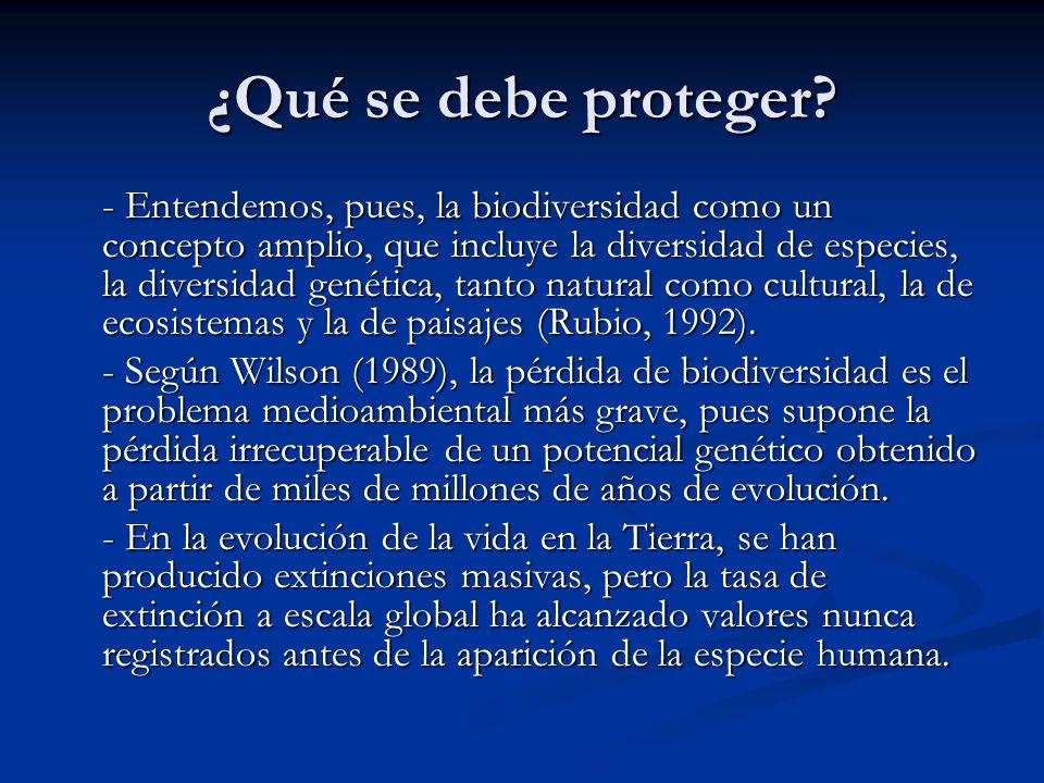 ¿Qué se debe proteger? - Entendemos, pues, la biodiversidad como un concepto amplio, que incluye la diversidad de especies, la diversidad genética, ta