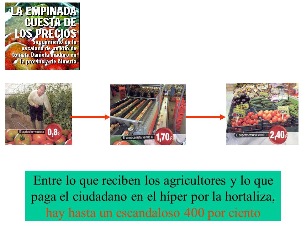 Entre lo que reciben los agricultores y lo que paga el ciudadano en el híper por la hortaliza, hay hasta un escandaloso 400 por ciento