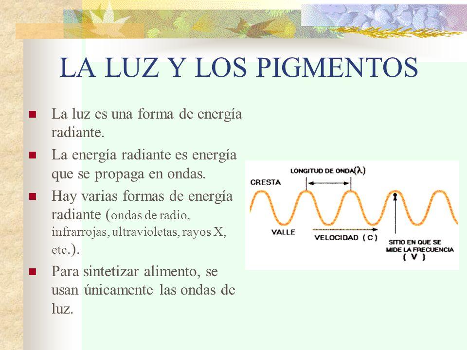 LA LUZ Y LOS PIGMENTOS La luz es una forma de energía radiante. La energía radiante es energía que se propaga en ondas. Hay varias formas de energía r