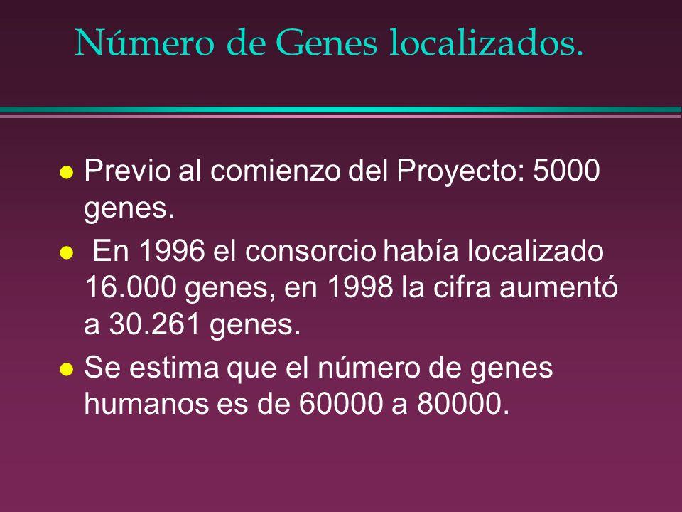 Número de Genes localizados. l Previo al comienzo del Proyecto: 5000 genes. l En 1996 el consorcio había localizado 16.000 genes, en 1998 la cifra aum