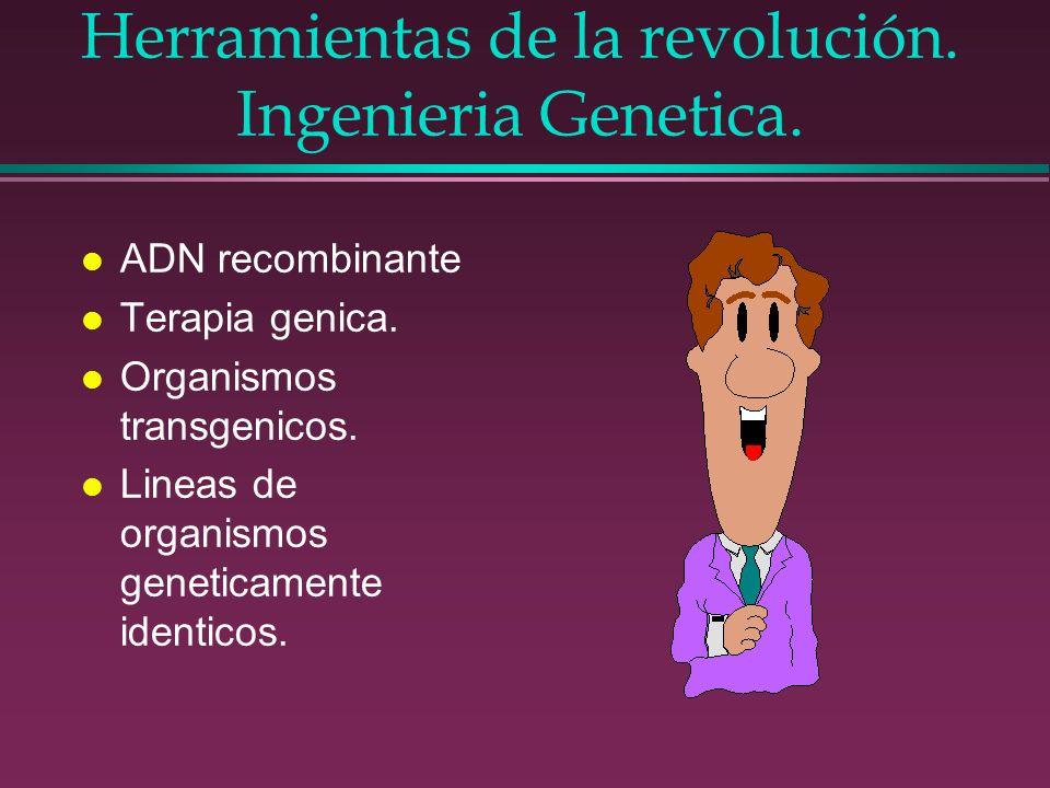 Herramientas de la revolución. Ingenieria Genetica. l ADN recombinante l Terapia genica. l Organismos transgenicos. l Lineas de organismos geneticamen
