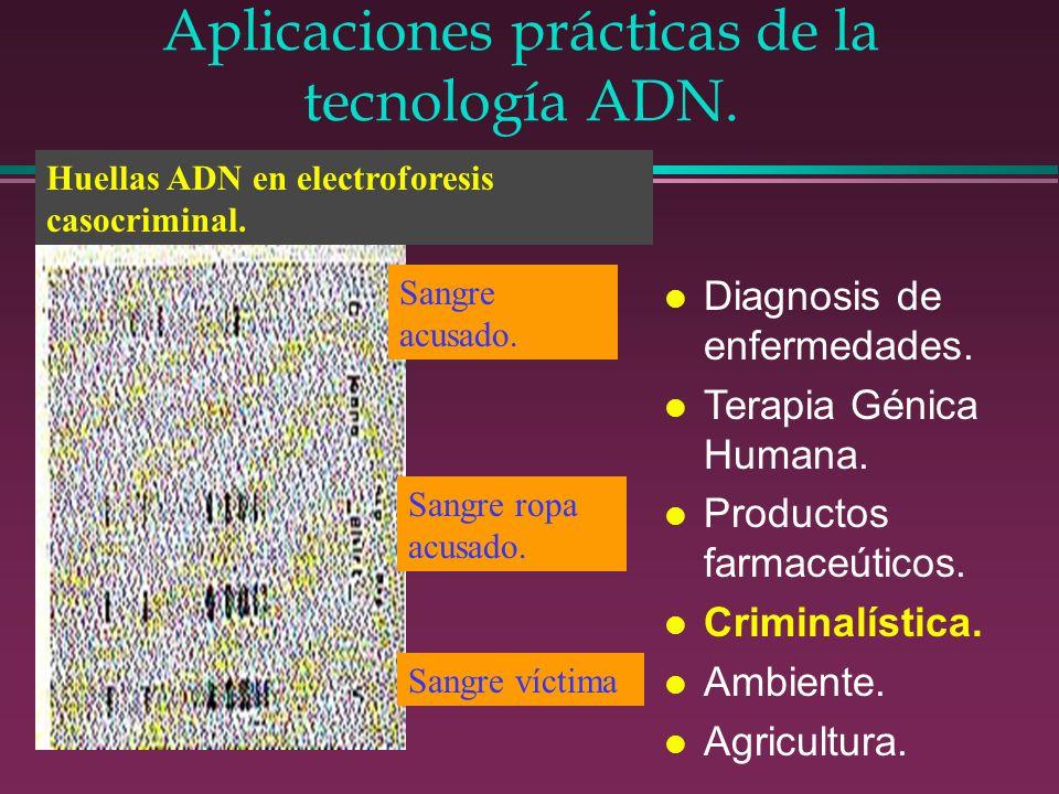 Aplicaciones prácticas de la tecnología ADN. l Diagnosis de enfermedades. l Terapia Génica Humana. l Productos farmaceúticos. l Criminalística. l Ambi