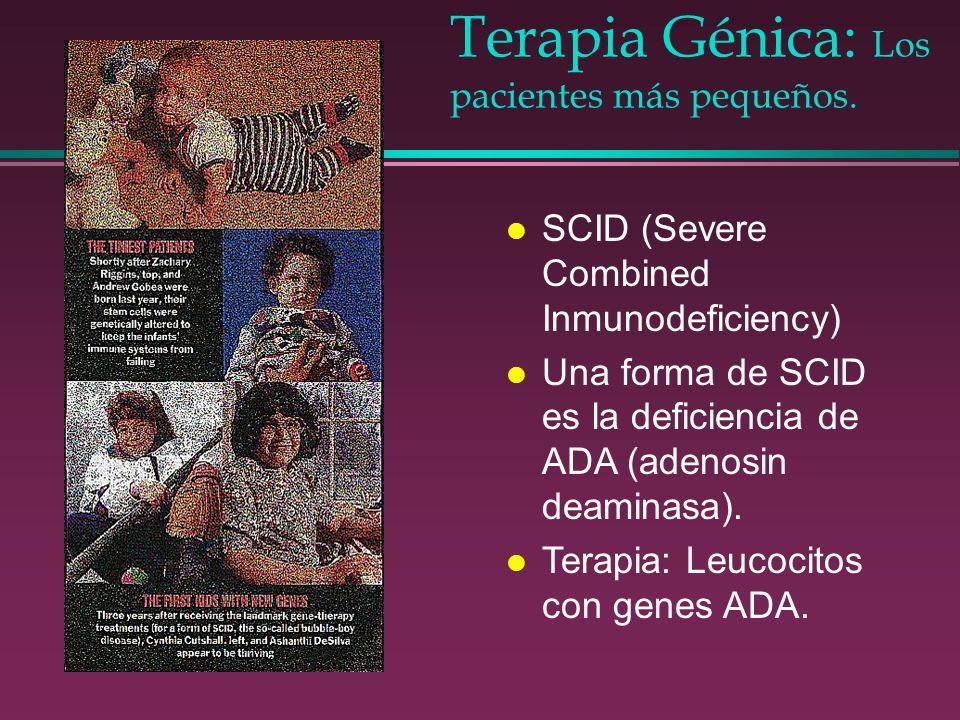 Terapia Génica: Los pacientes más pequeños. l SCID (Severe Combined Inmunodeficiency) l Una forma de SCID es la deficiencia de ADA (adenosin deaminasa